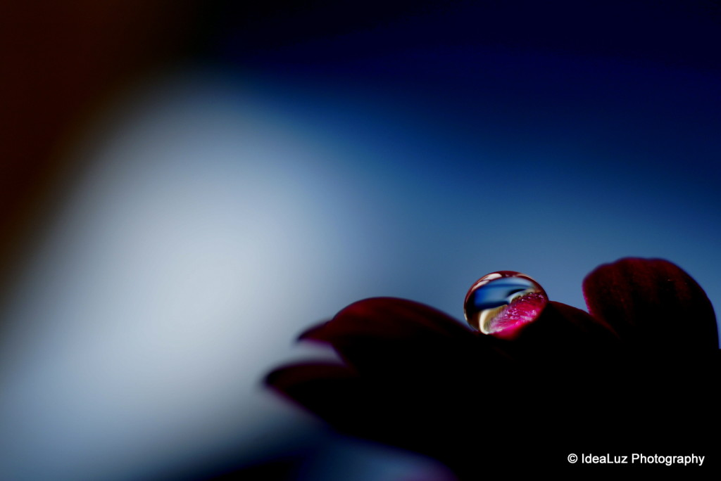 Droplet, drop, petal, flower, pink, blue, macro, Sony, Sigma, water, dark, silhouette