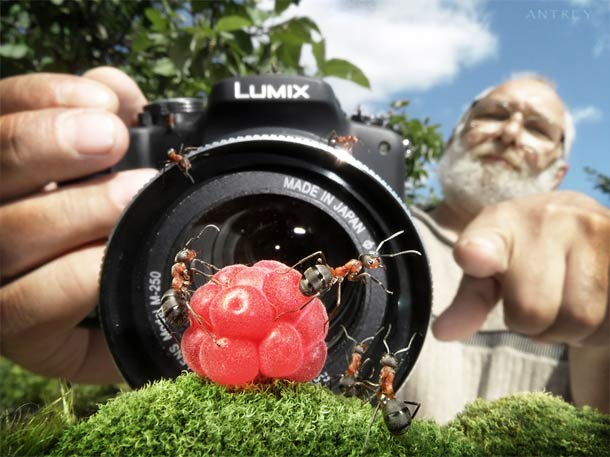 ant-tales-macrophotographie-21