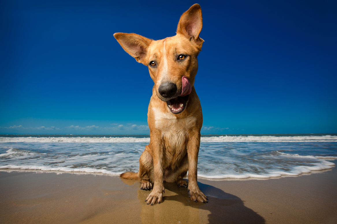 The Best Dog Photographers who Support a Cause: Help Us ...