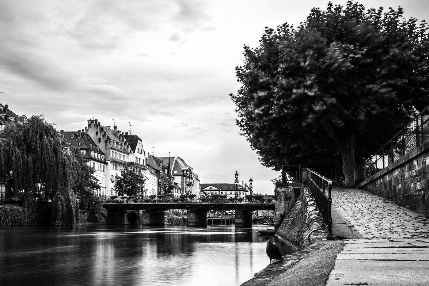 A view along the river Rhine in Strasbourg, France. Camera on a portable mini tripod, photo taken while eating a decidedly mediocre lunch with a work colleague.